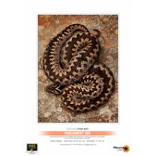 Parchment 285 A4 - 25 Sheets